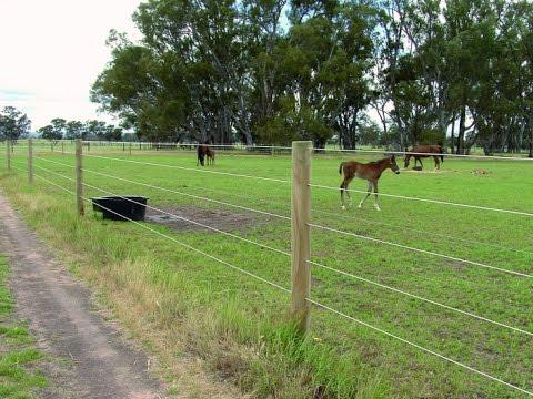 cloture electrique chevaux