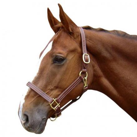 licol pour cheval