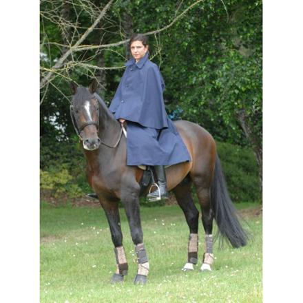 longe equitation