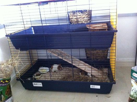 cage pour 2 cochon d inde