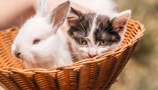 chat et lapin