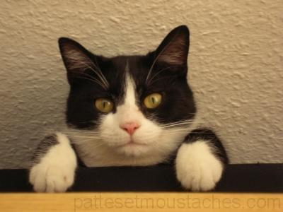 chat felix