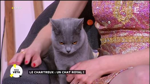 chat royal