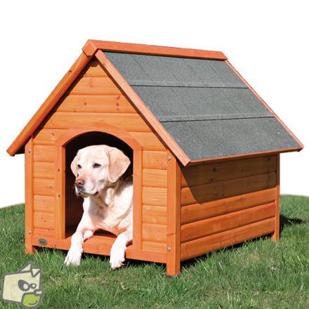 chien niche