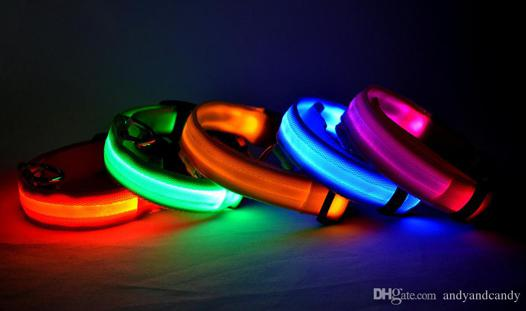 collier led chien