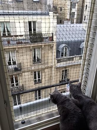 filet de protection pour chat sans percer