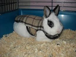 habit pour lapin