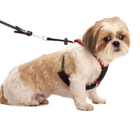 harnais pour petit chien
