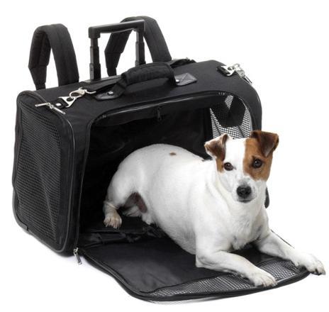panier de voyage pour chien