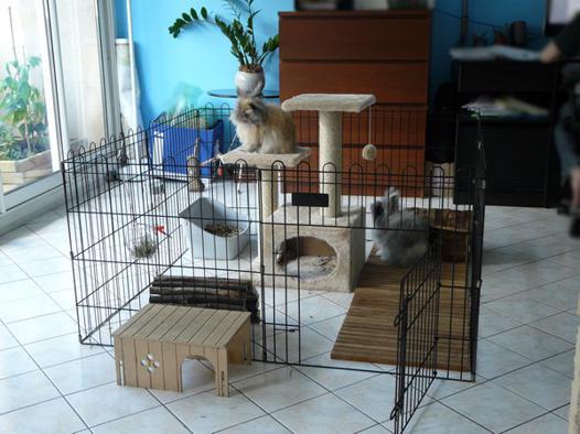 parc pour lapin appartement
